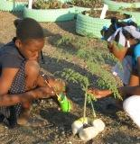 Two girls decorate a tree planter in Cite Soleil Tap Tap Garden 2